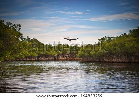 Blue Heron taking flight - stock photo