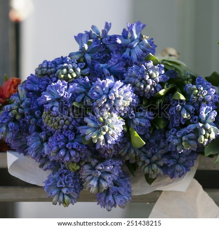 blue hyacinths on the wooden counter - stock photo