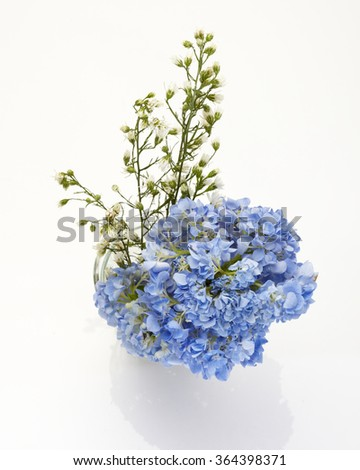 Blue Hydrangea flower isolated on white.