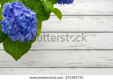 Blue hydrangea flower over white wooden background. - stock photo