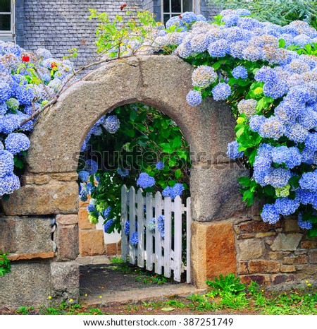 Blue hydrangea flowers decorating a stone house gate in Brittany, France - stock photo