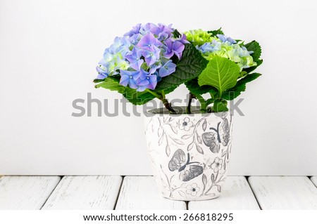 Blue hydrangea flowers on white wooden table against white wall, side view. - stock photo