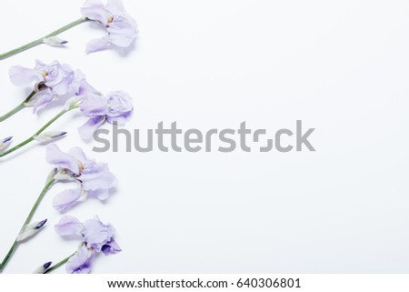 Blue iris flowers lie on a white background, top view