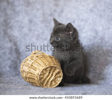Blue Kitten sitting with a small wicked basket. Close up of cute gray kitten - stock photo