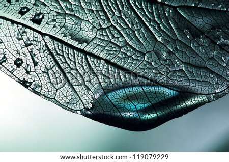 blue leaf with droplet - stock photo