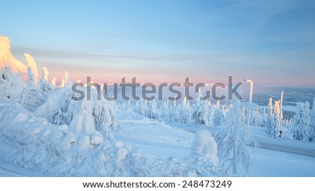 Blue light over the snow trees at lapland - stock photo