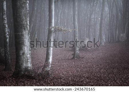 Blue light through the fog - stock photo
