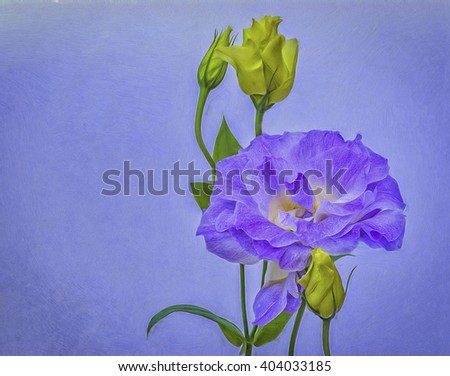 Blue lisianthus flower bloom isolated against textured background,photo art