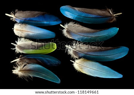 Blue macaw feathers - stock photo