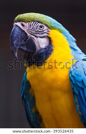 blue macaw parrot with yellow belly and green head