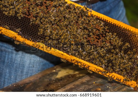 blue marked bee queen among  bees  on honeycomb removed from hive