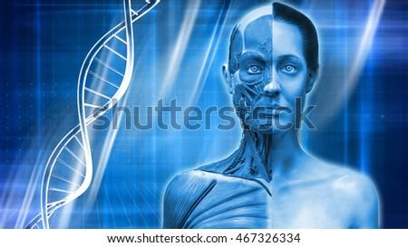 Blue Medical Background Human Anatomy Muscle Stock Illustration
