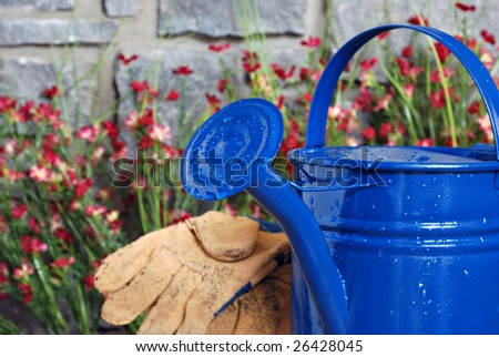 Blue metal watering can with stone wall, flowers and gloves in background.  Selective focus on spout with water droplets.  Shallow dof.