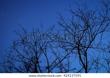 Blue midnight toned night image of tree branches set against an aqua colored sky. There are no leaves on the twigs in this nature abstract image. - stock photo