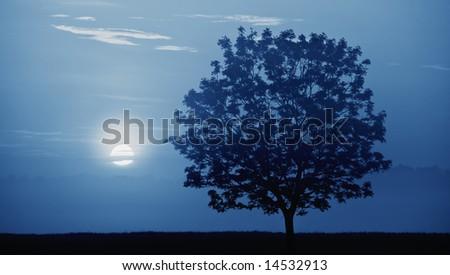 Blue moon light, fog and tree. Night shot. - stock photo