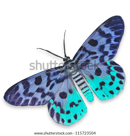 Blue Moth Butterfly Isolated on White