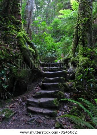 Blue Mountains National Park, UNESCO, Australia - stock photo