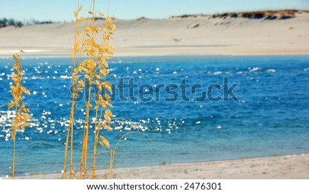 Blue Ocean and Sea Oats