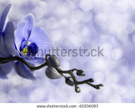 blue orchid on defocused background