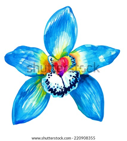 blue orchid watercolor drawing - stock photo
