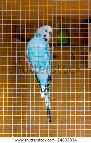 Blue parrot in cage - stock photo
