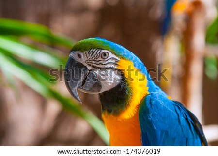 Blue Parrot portrait with yellow neck in the park - stock photo