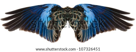 Blue parrot wings isolated on white - stock photo