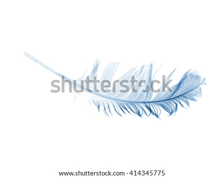 blue pen feather isolated on a white background - stock photo
