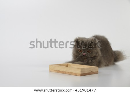 Blue persian cat tongue out and looking at wooden tray  - stock photo
