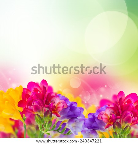 Blue Pink And Yellow Freesia Flowers Border On Garden Bokeh Background
