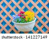 blue red and yellow pansy flower in flowerpot hanging decorated on wooden wall - stock photo