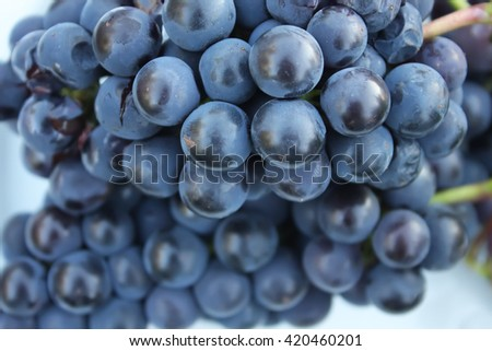 Blue ripe grapes close up - stock photo