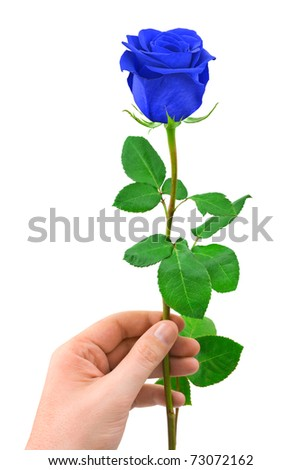 Blue rose in hand isolated on white background - stock photo