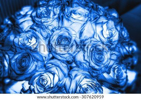 blue roses background - stock photo