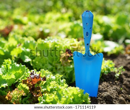 Blue scoop and green lettuce. - stock photo