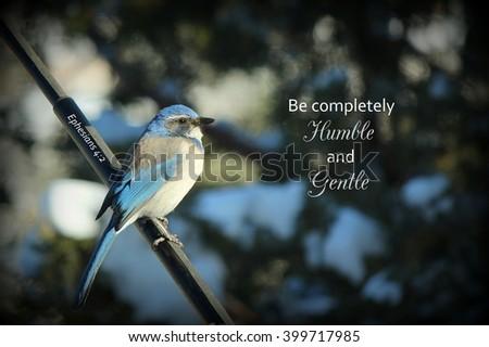 Blue Scrub Jay Bird Perching on a pole - stock photo