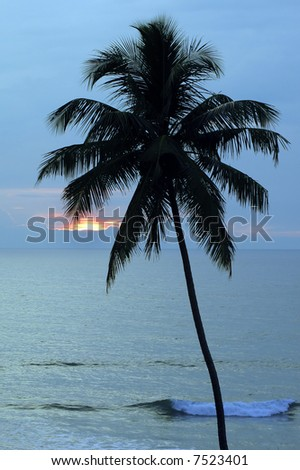 blue sea sunset through palm - stock photo