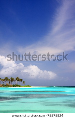 blue sea with coconut palm