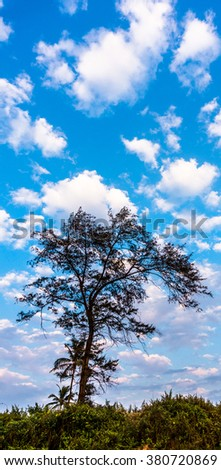 Blue sky and a silhouette of the tree. - stock photo