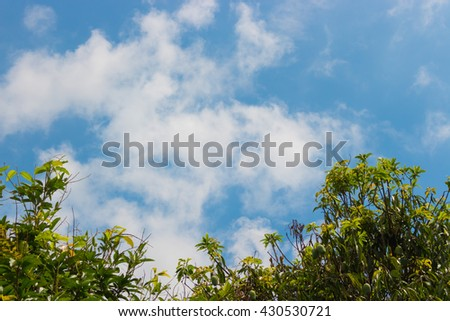 Blue sky and cloud with green trees frame. For abstract background or insert text copy space.