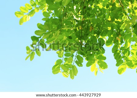 Blue sky and fresh green tree