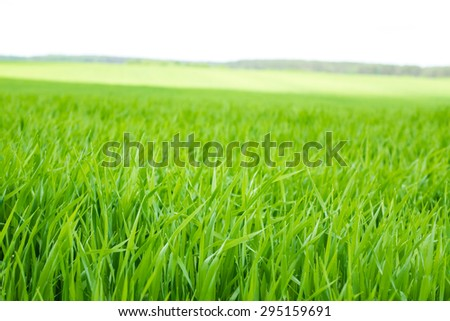 Blue sky and green grass background - stock photo