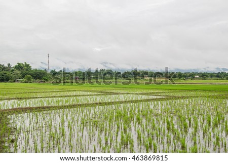 Blue sky and green Terraced Rice Field in Chiangmai Thailand soft focus.