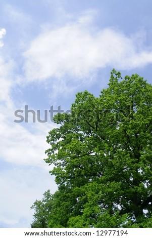Blue sky and green tree-oak - stock photo