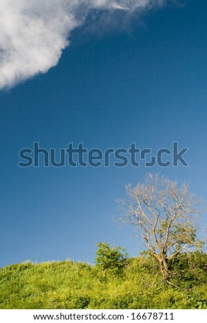 Blue sky and tree - stock photo