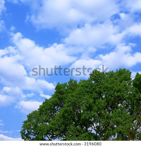 blue sky and tree - stock photo
