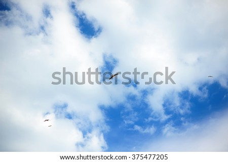 Blue sky background with white clouds and a flying bird silhouette. Blue clear sky panorama with cloud closeup. - stock photo
