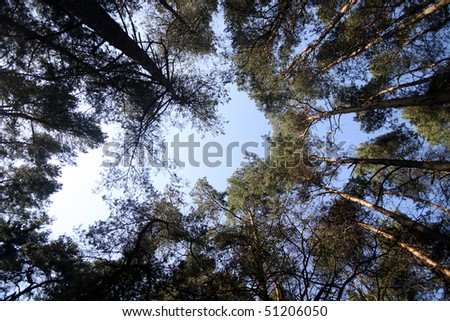 Blue sky between the tree tops in a dark forest in Germany - stock photo