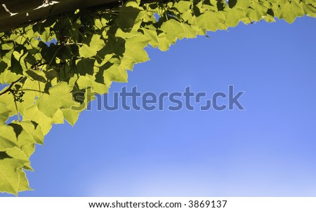 Blue Sky framed by Backlit Ivy - stock photo
