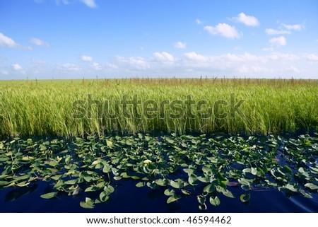 Blue sky in Florida Everglades wetlands green plants horizon, nature - stock photo